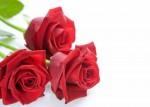 cuisine-et-service-de-table-set-de-table-trois-roses-rouges-sur-1924164-monatu-fle-122-2-a3-7e221_big.jpg